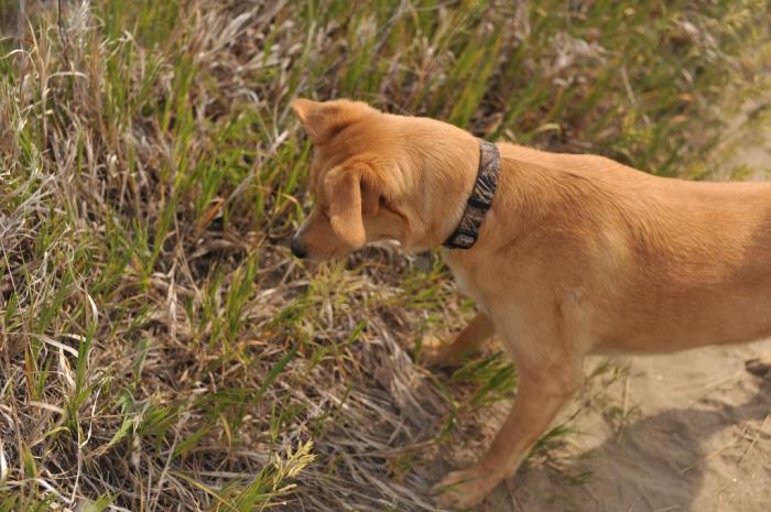D700 Dogs beach snake_0028