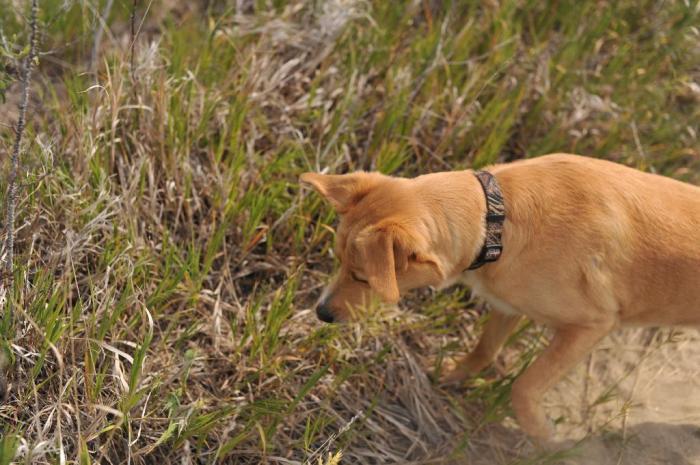 D700 Dogs beach snake_0029