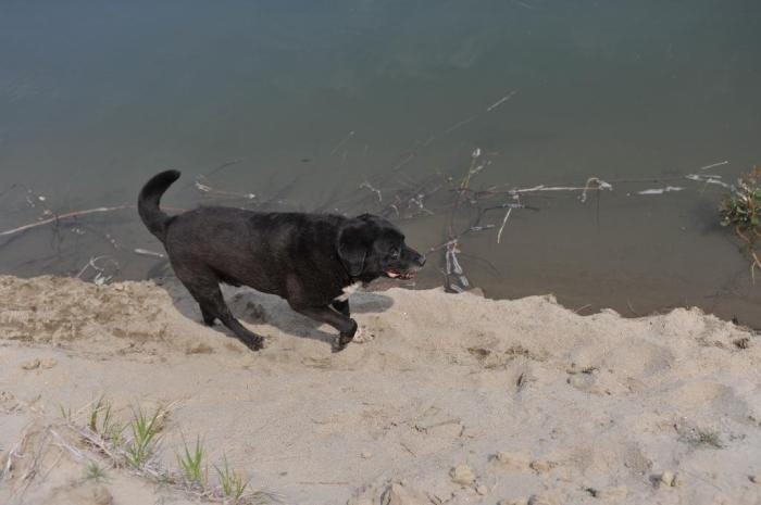D700 Dogs beach snake_0033