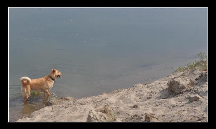 D700 Dogs beach snake_0040 copy