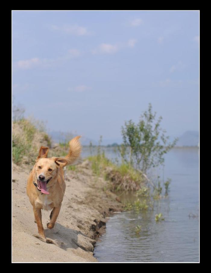 D700 Dogs beach snake_0042 copy