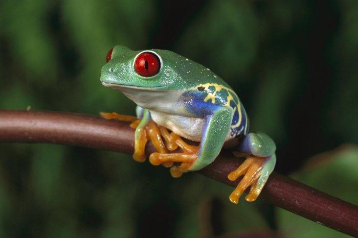 kamloops photographer jo leflufy frog
