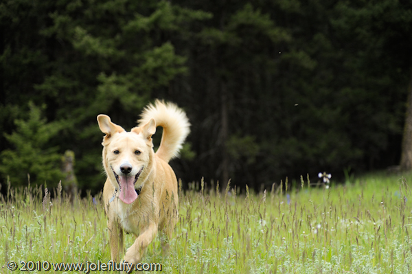 kamloops pet photographer